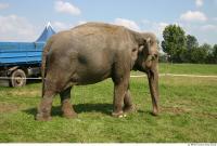 Elephant 0007