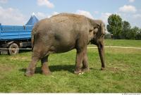 Elephant 0008