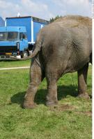 Elephant 0010