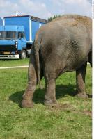 Elephant 0011