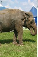 Elephant 0012