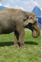 Elephant 0013