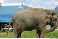 Elephant 0016