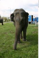 Elephant 0018