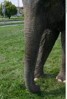 Elephant 0019