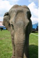 Elephant 0021