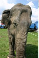 Elephant 0022