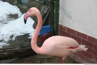 Flamingos 0003