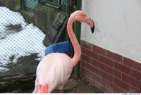 Flamingos 0004