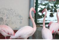 Flamingos 0018