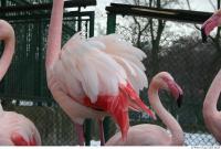 Flamingos 0029