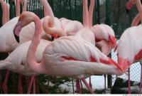 Flamingos 0031