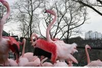 Flamingos 0041