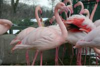 Flamingos 0053