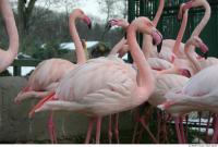 Flamingos 0054