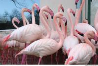 Flamingo II 0030