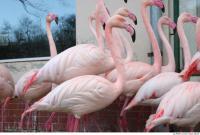 Flamingo II 0031
