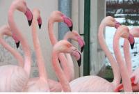 Flamingo II 0032