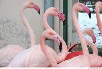 Flamingo II 0033