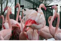 Flamingo II 0036
