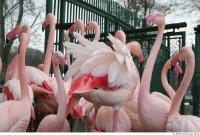 Flamingo II 0037
