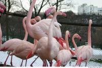 Flamingo II 0042