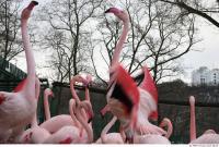 Flamingo II 0043