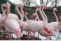 Flamingo II 0045