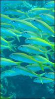 Fish # 2