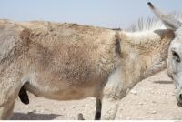 Donkey # 2