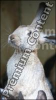 Rabbit # 2