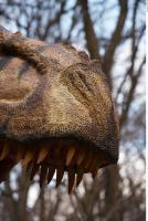 Thyranosaurus 0080