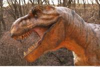 Thyranosaurus 0095
