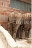 Elephant # 3