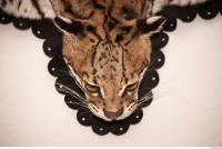 Animal preserved