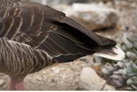 Goose # 3