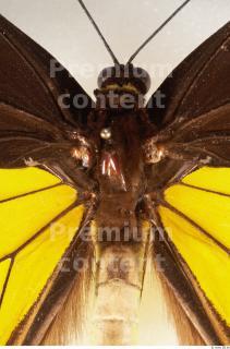 Butterfly # 2