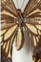 Butterfly # 6