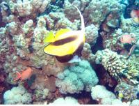 Fish # 9