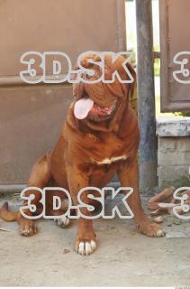 Dog 0002