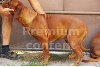 Dog 0044