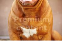 Dog 0015