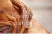 Dog 0023