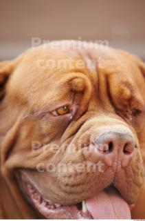 Dog 0060