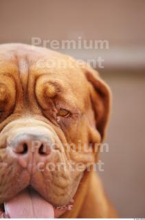 Dog 0061