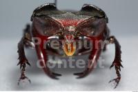 Beetles 0017