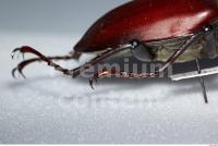 Beetles 0016