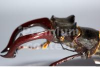 Beetles 0020