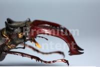 Beetles 0015