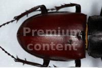Beetles 0009